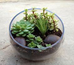 Succulents :)