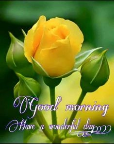 Good Morning Have a fabulous day Good Sunday Morning, Morning Thoughts, Morning Morning, Good Morning Flowers, Good Morning Wishes, Good Afternoon, Good Morning Quotes, Morning Status, Happy Morning
