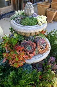 Succulents Old Fountain - what a great idea!