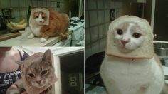 """Breading Cats"" .... oh COME ON NOW. http://gawker.com/5880885/hot-new-internet-meme-breading-cats"
