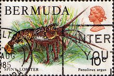 Bermuda 1978 Wildlife Spiny Lobster SG 392 Fine Used Scott 368 Other West Indies and British Commonwealth Stamps HERE!
