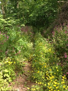 Now we've opened the tracks, the wildflowers are exceptional in the woods. Perfect for a walk while staying in one of our holiday carriages in St Germans, Cornwall Bird Tables, Insect Hotel, Earthworms, Holiday Accommodation, Wildlife Nature, Wildflowers, Cornwall, Woodland, Woods