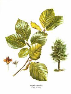 Coloriage Arbre Hetre.63 Meilleures Images Du Tableau Tree Arborescence Arbres