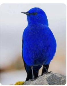 Cute Birds, Pretty Birds, Funny Birds, Exotic Birds, Colorful Birds, Tropical Birds, Beautiful Creatures, Animals Beautiful, Most Beautiful Birds