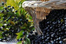 """Il Mirto di Sardegna jeb Miršu liķieris.  Alkoholiskais dzēriens """"Mirto di Sardegna"""" jeb Miršu liķieris ir viens no izcilākajiem un slavenkajiem visā Sardīnijā. Šo garšīgo liķieri gatavo no miršu ogām, kuras atgādina mellenes, kas ir tipisks augs Sardīnijā un Vidusjūrā. Šīs ogas parasti ir gatavas Novembra beigās un tās nolasa līdz Janvārim."""