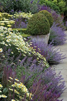 5 vivaces couvre-sols à longue floraison qu'il faut avoir! On cherche toujours LA vivace couvre-sol qui fleurit tout l'été, celle dont la floraison court sur plusieurs mois, la vivace qui ne s'arrête jamais de fleurir, celle qui garnit et...