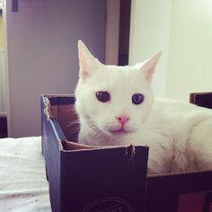 57 Gorgeous Cats With Heterochromia Iridum