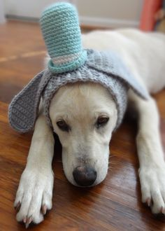 Bunnny Dog Hat Costume Bunny In A Sunday Hat by iheartneedlework Cute Puppies, Dogs And Puppies, Cute Dogs, Animal Costumes, Dog Costumes, Rabbit Accessories, Fashion Accessories, Animal Party, Party Animals