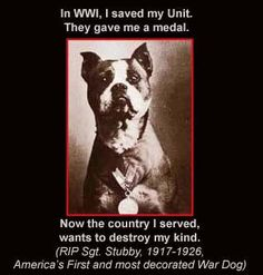 in WW1 I saved my unit. they gave me a medal. now the country I served wants to destroy my kind ... IMO, we shouldn't destroy the breed, but we most certainly should destroy the idiots who have given this breed a bad reputation.