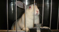 Don Lichterman: Proposed Law Likely to Mean Tests on Animals for C...