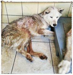 Help Oscar : A Shelter Dogs Last Wish