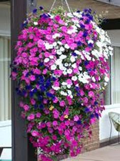 A variety of beautiful blooming hanging baskets.