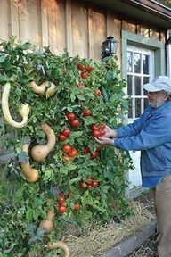 how to plant a vertical garden -