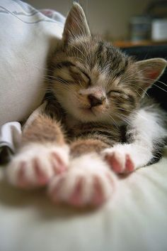 Cute Cats Birthday Wishes Cute Kittens Gif Cute Baby Cats, Cute Cats And Kittens, Cute Baby Animals, I Love Cats, Funny Animals, Adorable Kittens, Ragdoll Kittens, Tabby Cats, Funny Kittens