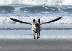 It's a bird! It's a plane! It's...actually just Snoopy the dog approaching a seagull on a beach in New Zealand.