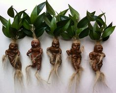 Muñeca de mandrágora, Harry Potter Mandrake, estatuilla de Mandragora
