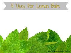 5 Uses for Lemon Balm
