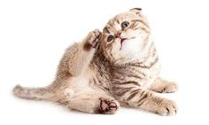 5 Tips for Keeping Cats Flea Free Playful Kitty guest posted today on Petnet.io! #cats #blog