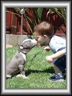 Baby and pit...beautiful
