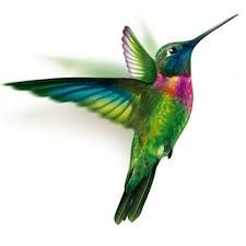 Resultado de imagen para colibríes volando
