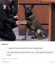 The 100 Best Dog Memes Ever They're all good boys. The post The 100 Best Dog Memes Ever appeared first on Fashion Ideas - Fashion Trends. Animal Jokes, Funny Animal Memes, Cute Funny Animals, Funny Animal Pictures, Funny Cute, Funny Dogs, Funniest Pictures, Hilarious Pictures, Funny Photos