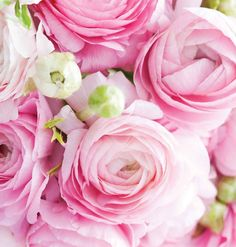 birthday messages Birthday Quotes : Pretty Pink Happy Birthday Roses - The Love Quotes Happy Birthday Flowers Images, Happy Birthday Rose, Birthday Wishes Flowers, Happy Birthday Wishes Cards, Birthday Wishes And Images, Birthday Roses, Birthday Blessings, Happy Birthday Pictures, Card Birthday