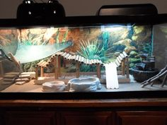 31 The tank decoration of an attractive bearded dragon habitat - meowlogy Bearded Dragon Tank Setup, Bearded Dragon Vivarium, Bearded Dragon Enclosure, Bearded Dragon Terrarium, Bearded Dragon Habitat, Bearded Dragon Diet, Bearded Dragon Cage Ideas, Lizard Cage, Reptile Room