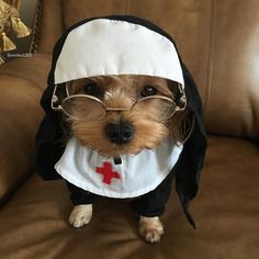 Nun Dog Halloween Costume