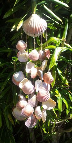 Seashell Wind Chime by SusysSeashells on Etsy