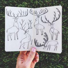 1canoe2 on Instagram | illustration elk buck deer