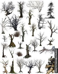 PSD и PNG клипарт (на прозрачном фоне) - Растения, трава, кусты, деревья, листья, ветки - Фотошаблоны. Шаблоны для фотошопа, скачать бесплатно