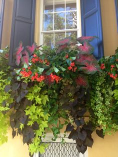 The most incredible flower boxes on Meeting Street, Charleston, SC #southofbroad #windowbox #charleston