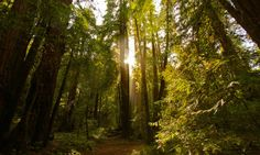The top reasons why you should visit Muir Woods National Monument - Posted on Roadtrippers.com!