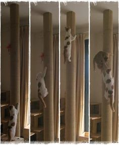 I am so going to try and make this for my cats!!!