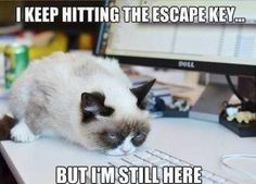 Grumpy cat, grumpy cat meme, grumpy cat quotes, funny grumpy cat quotes, grumpy cat jokes …For the funniest quotes and hilarious pictures visit www. Grumpy Cat Quotes, Funny Grumpy Cat Memes, Cat Jokes, Cats Humor, Hilarious Memes, Cute Cat Memes, Funny Kitties, Funny Minion, Funny Pranks