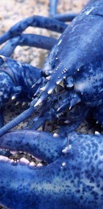 I am blue without lobster... #JoesCrabShack