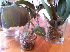 Nowa metoda uprawy storczyków,cd.15 - YouTube Orchid Care, Youtube, Gardens, Diy, Plants, Flowers, Cactus, Balcony, Bricolage