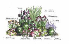 http://www.starkl.at/user/Image/Gartenplanung/Wien/Beetbepflanzung/staudenbeet_skizze_gross.jpg
