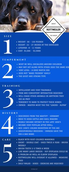 ROTTWEILER Fast Facts Infographic about this amazing dog breed – size – temperament – training and care. Rottweiler Dog Breed, Rottweiler Facts, Rottweiler Training, German Rottweiler, Dog Training Techniques, Dog Training Videos, Best Dog Training, German Dog Breeds, Dog Breeds