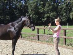 Groundwork For Horses | Straightness Training