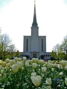 London England Temple in the Spring. Tulips. Lovely.  #Mormon #LDS