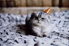 This kitty looks sad. Is it because no one came to his party? :(