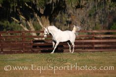 Alphabet Soup won ten of 24 career starts and earned USD 2,990,270