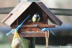 vogelhuisje. Door Jos gemaakt!