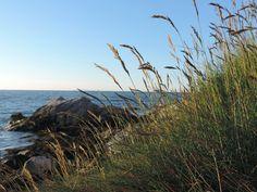 Coastal Grasses, Portmuck