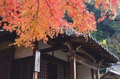 北鎌倉・明月院   Meigetsu-in・Kita-Kamakura