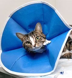 Lucky NYC Cat Survives Five-Story Fall onto Spiked Fence