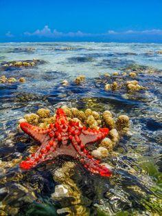 Zanzibar seastar - ©Vezio Paoletti - http://photo.net/photodb/photo?photo_id=16805492