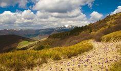 Карпатський біосферний заповідник - Природні парки - Закарпатська - Україна - Украина Carpathian Biosphere Reserve, Western Ukraine