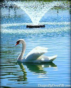 Swan Majestic Water Fountain 16x20 Original by DesignsByDonnElle